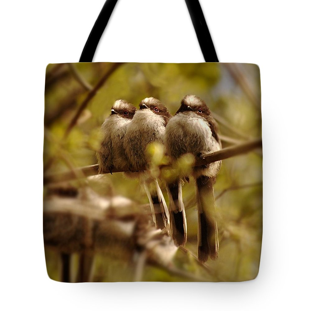 Long Tailed Tits Tote Bag featuring the photograph Longtailed Tit Fledglings by Gavin Macrae
