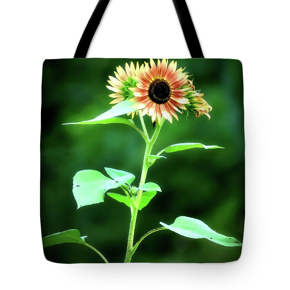 Sunflower Tote Bag featuring the photograph Look On The Bright Side by Bill Cannon