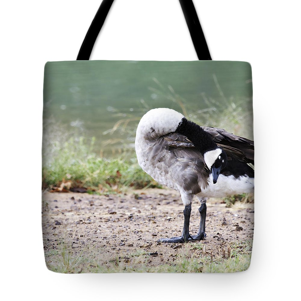 Canadian Goose Tote Bag featuring the photograph Looking Back by Douglas Barnard