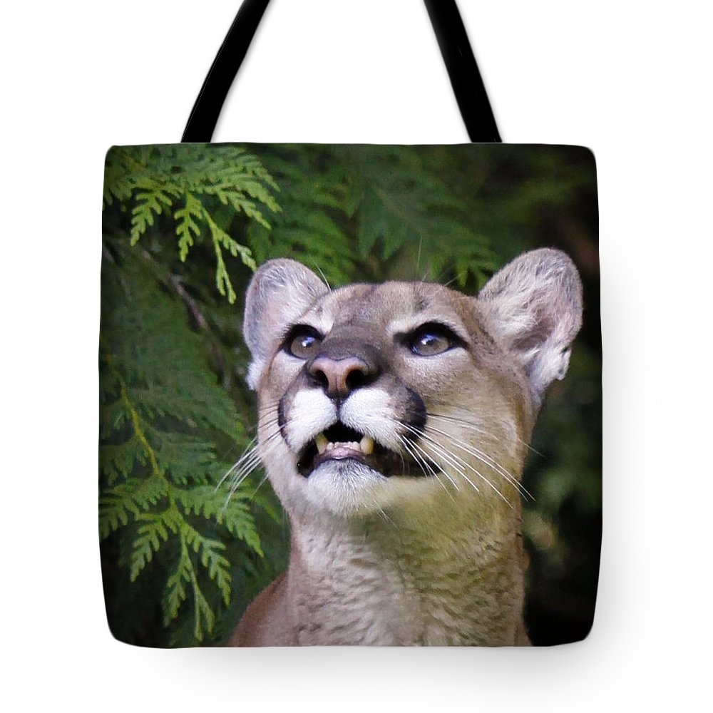 Cougar Tote Bag featuring the photograph Looking Up by Steve McKinzie