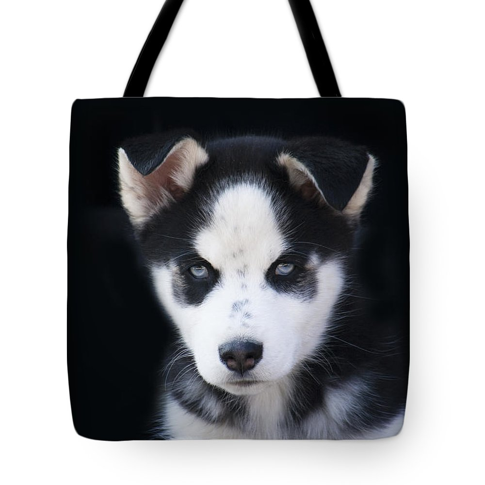 Lop Eared Tote Bag featuring the photograph Lop Eared Siberian Husky Puppy by Kathy Clark