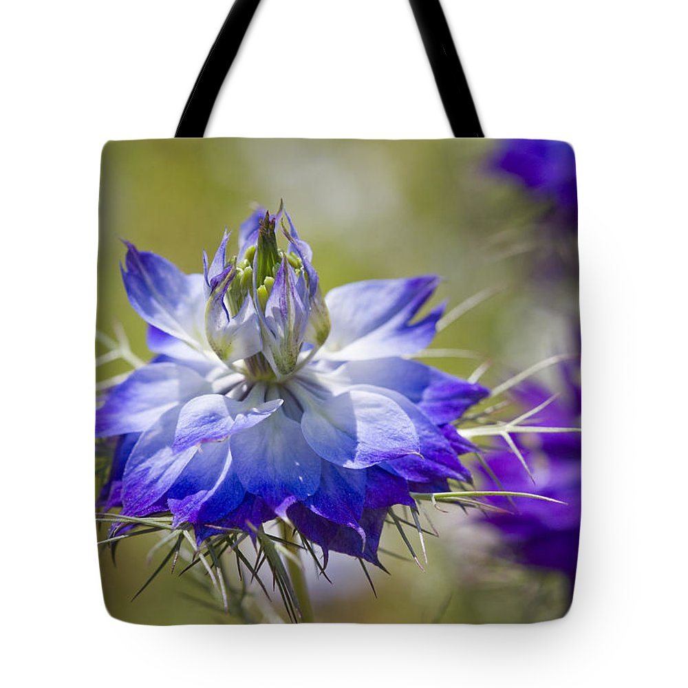 Nigella Tote Bag featuring the photograph Love In The Mist - Nigella by Kathy Clark