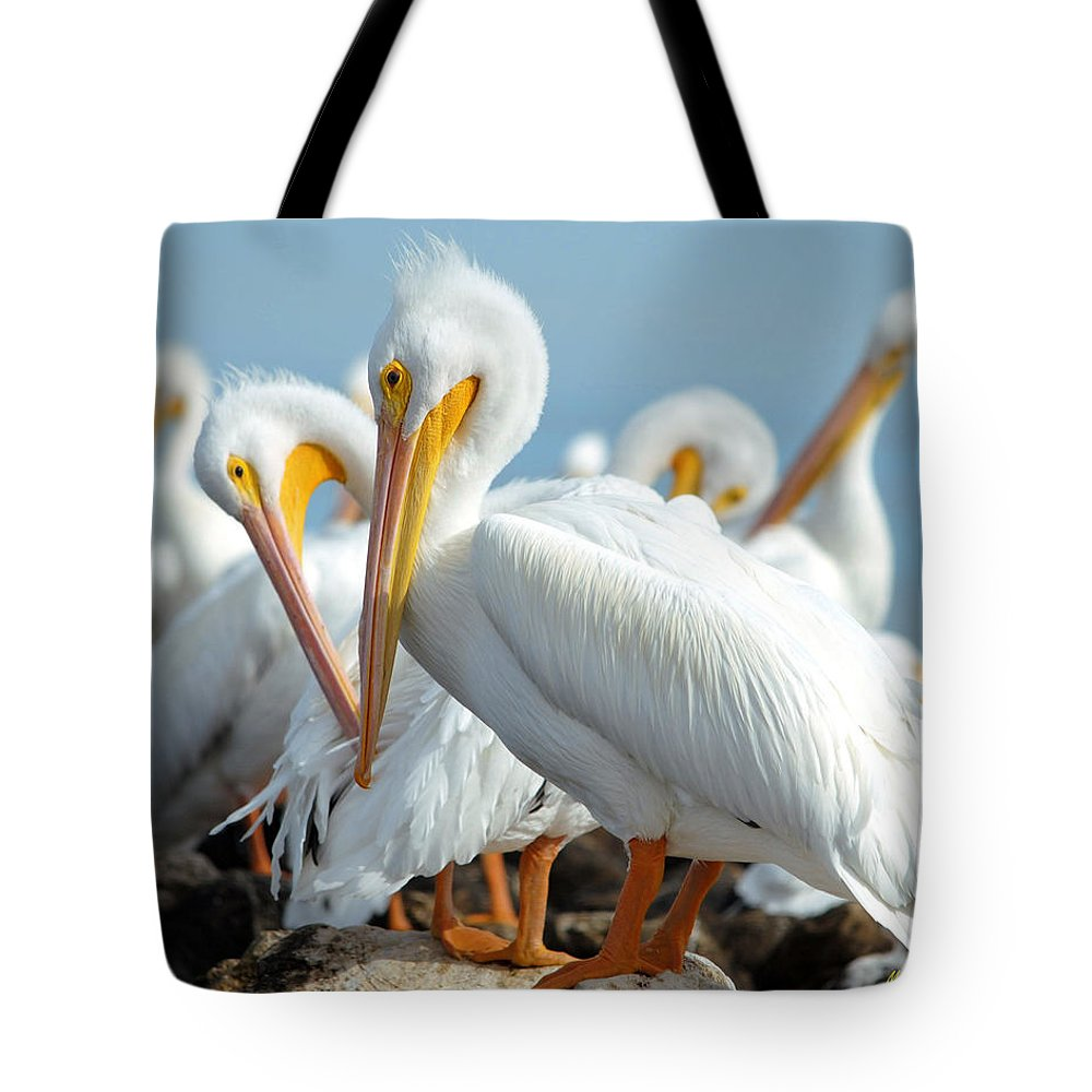 Pelicans Tote Bag featuring the photograph Love Is In The Air... by Maria Nesbit