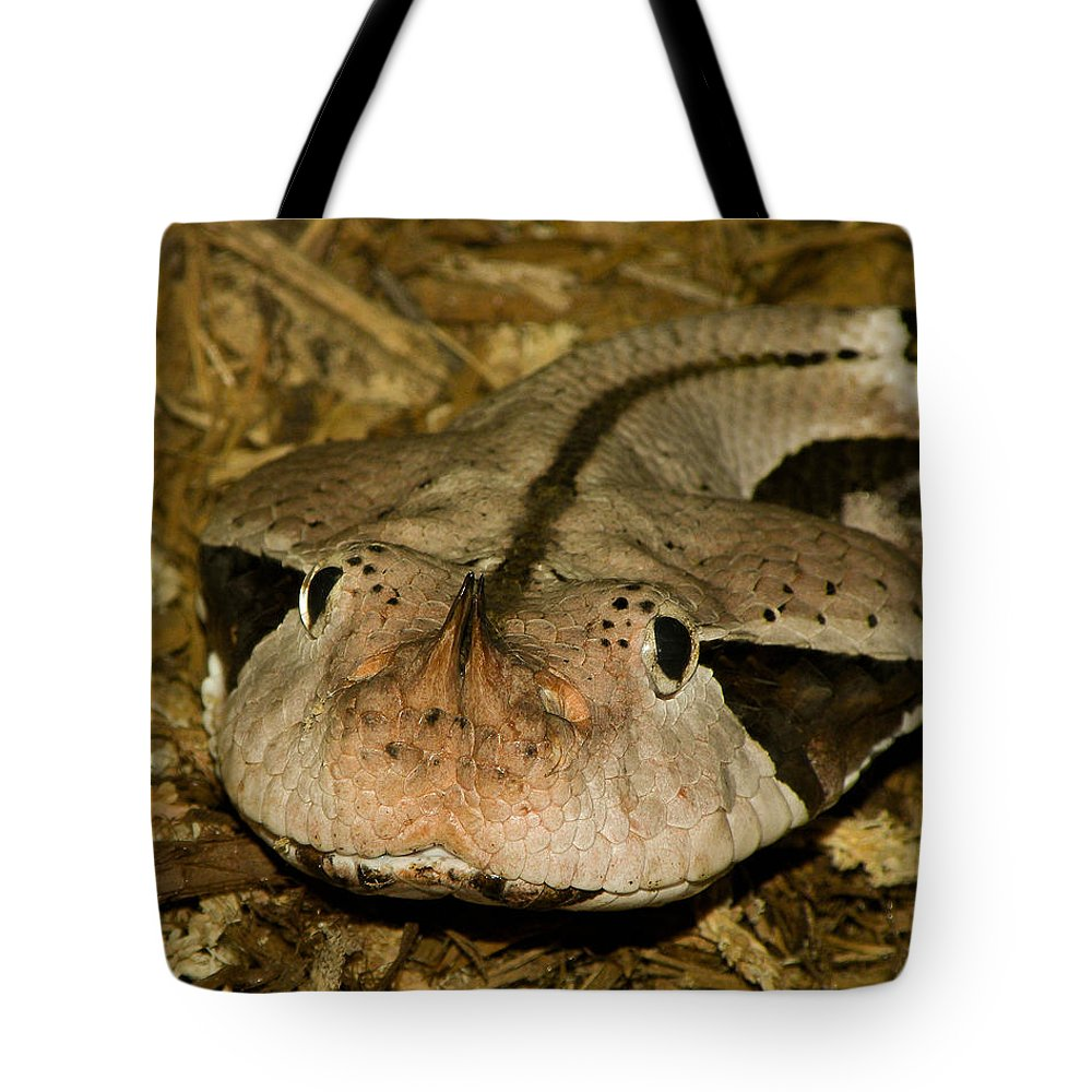 Snake Tote Bag featuring the photograph Lower Than Low by Trish Tritz