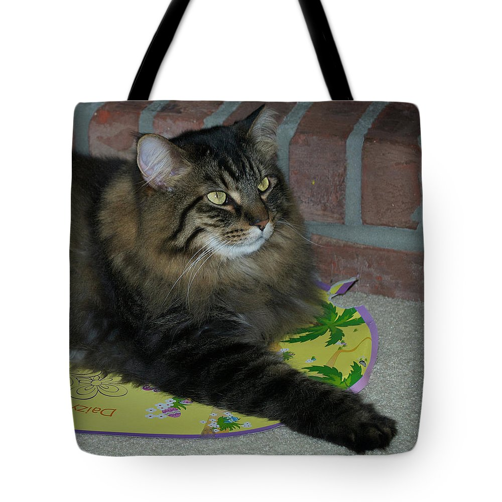 Animals Tote Bag featuring the photograph Lucky The Cat by Thomas Woolworth