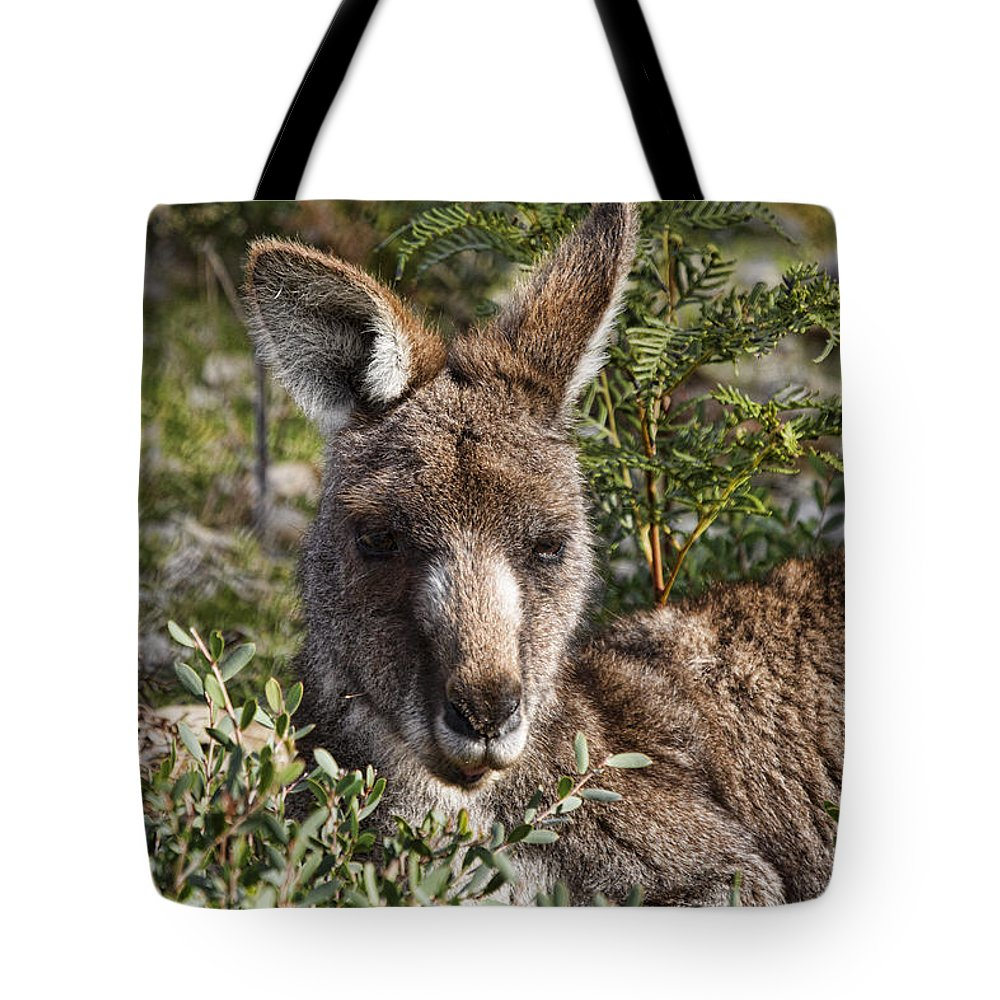 Wallaby Tote Bag featuring the photograph Lying Low by Douglas Barnard