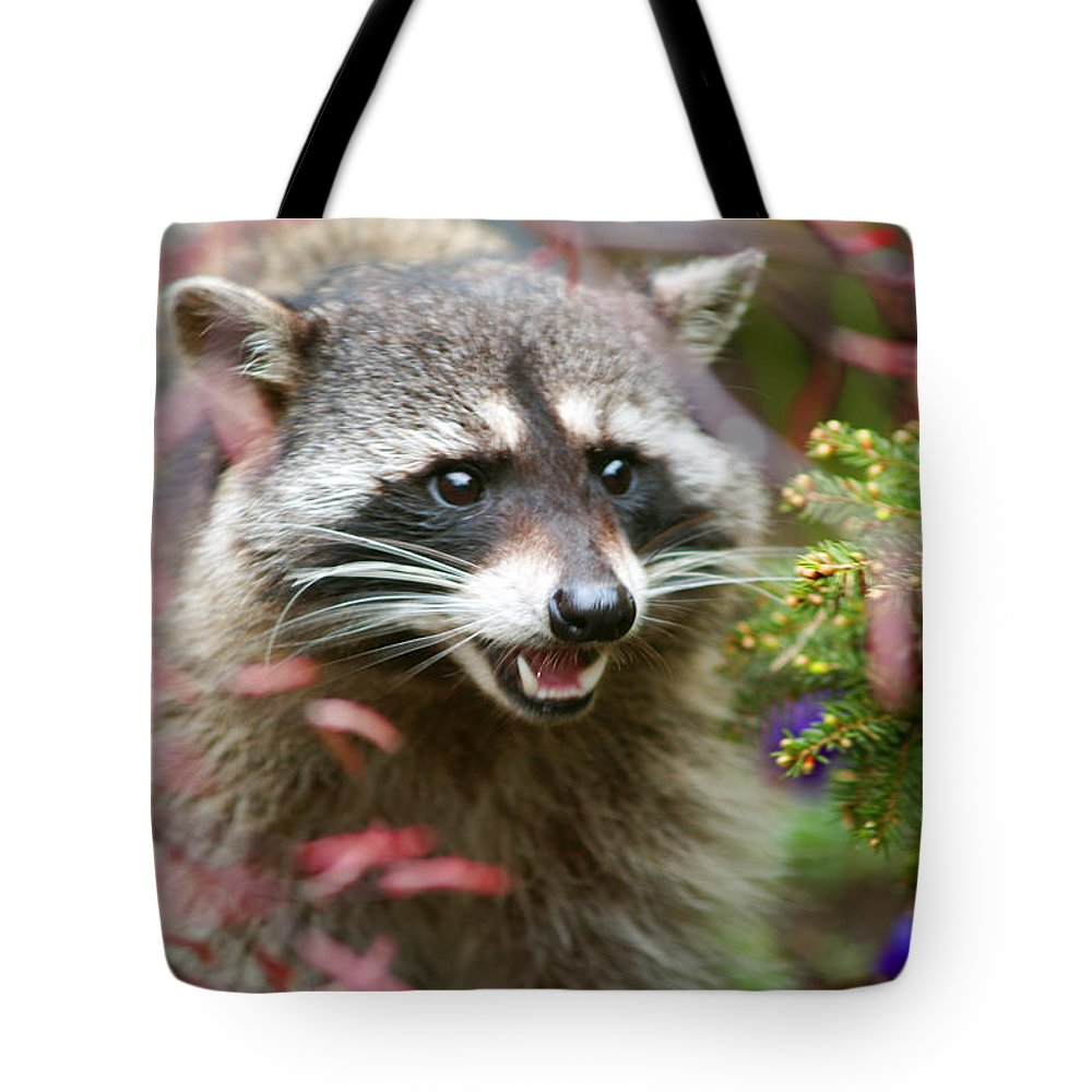 Raccoon Tote Bag featuring the photograph Mad Raccoon by Randy Harris
