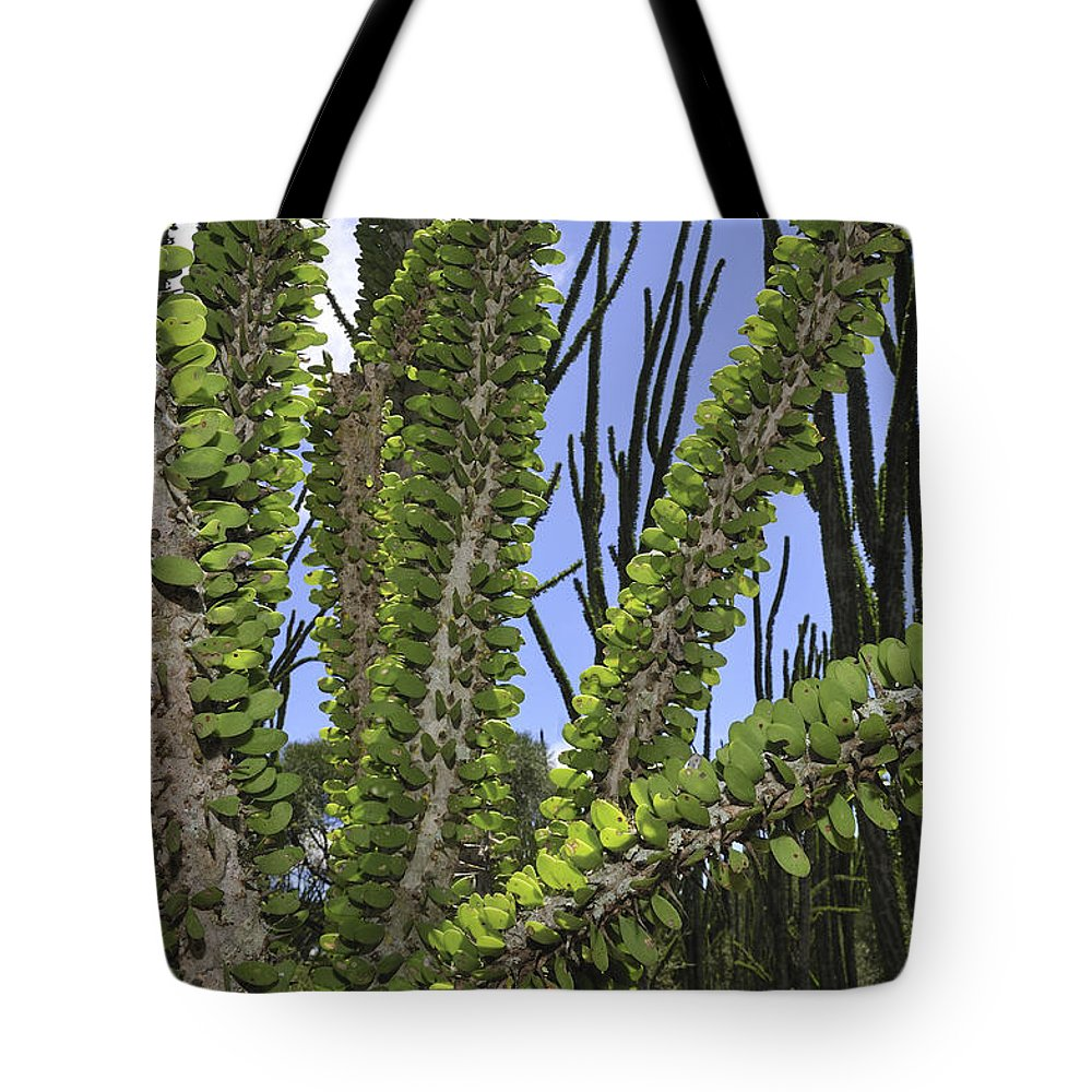 Mp Tote Bag featuring the photograph Madagascan Ocotillo Alluaudia Procera by Thomas Marent