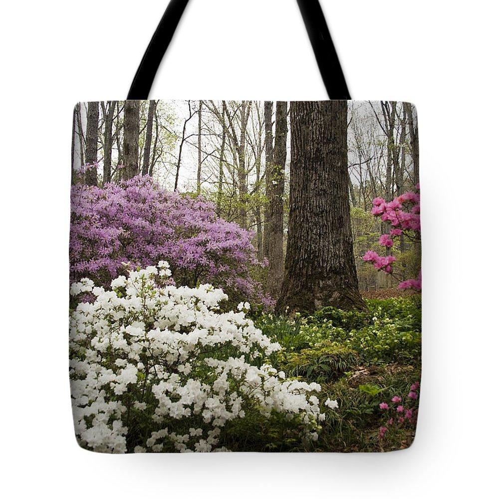 Azalea Tote Bag featuring the photograph Magical Azaleas At Callaway Botanical Gardens by Kathy Clark