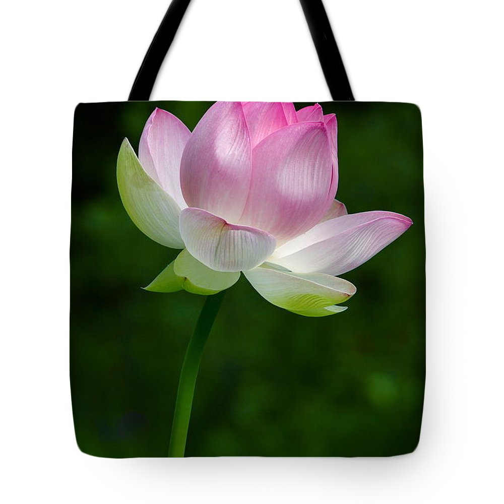 Magical Lotus Flower Tote Bag For Sale By Byron Varvarigos