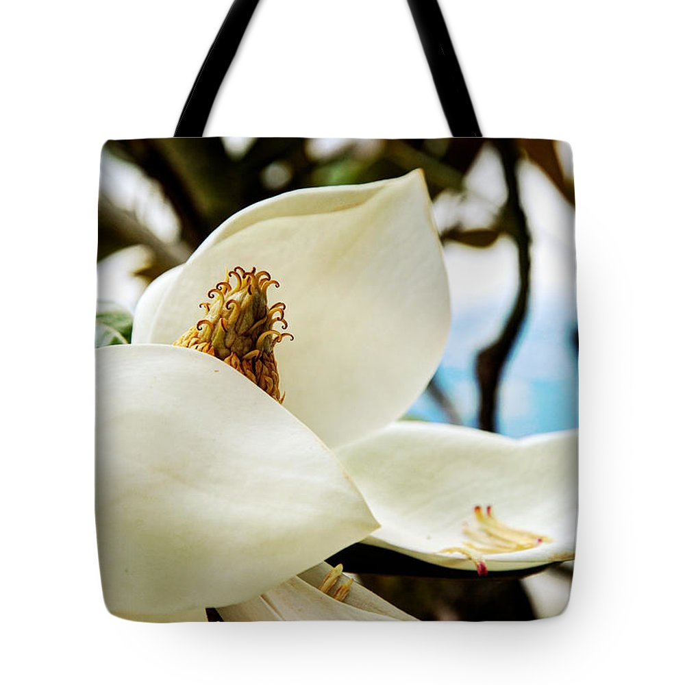 Magnolia Tote Bag featuring the photograph Magnolia by Lisa Knechtel