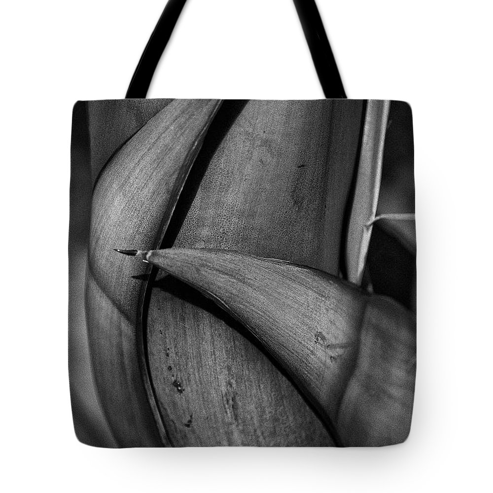 Plants Tote Bag featuring the photograph Maguey Caress by Javier Barras