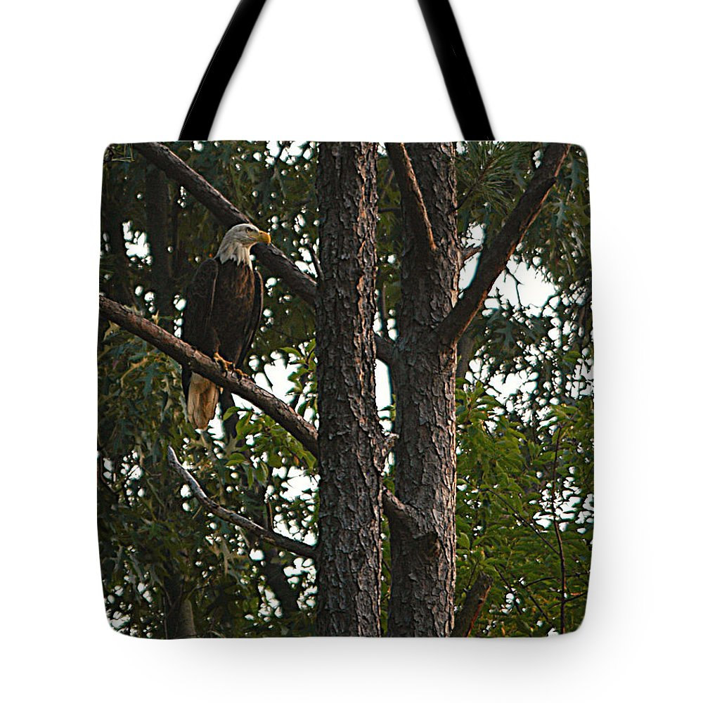 All Rights Reserved Tote Bag featuring the photograph Majestic Bald Eagle by Clayton Bruster