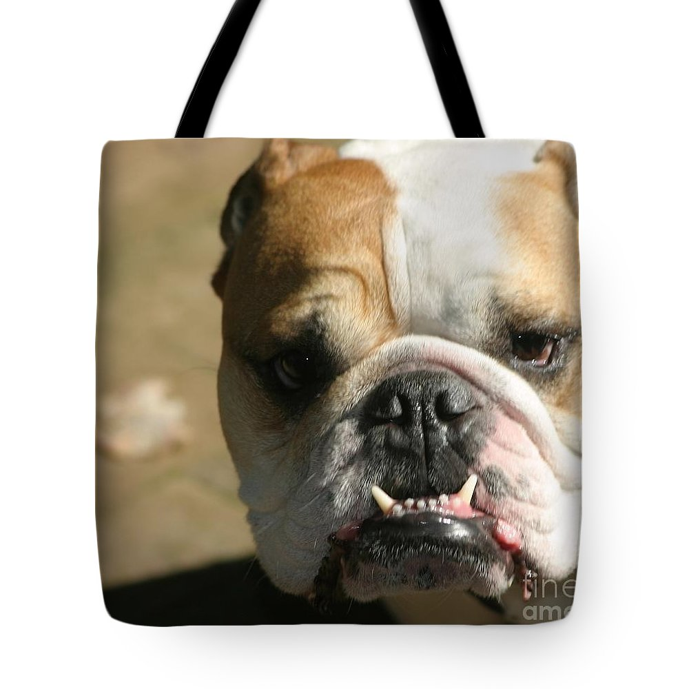 Animals Tote Bag featuring the photograph Make My Day by Living Color Photography Lorraine Lynch