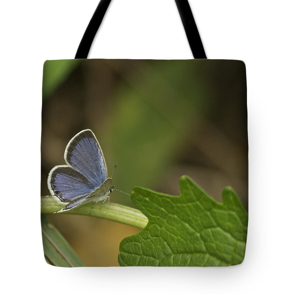 Blue Tote Bag featuring the photograph Male Eastern Tailed Blue Butterfly 3063 by Michael Peychich