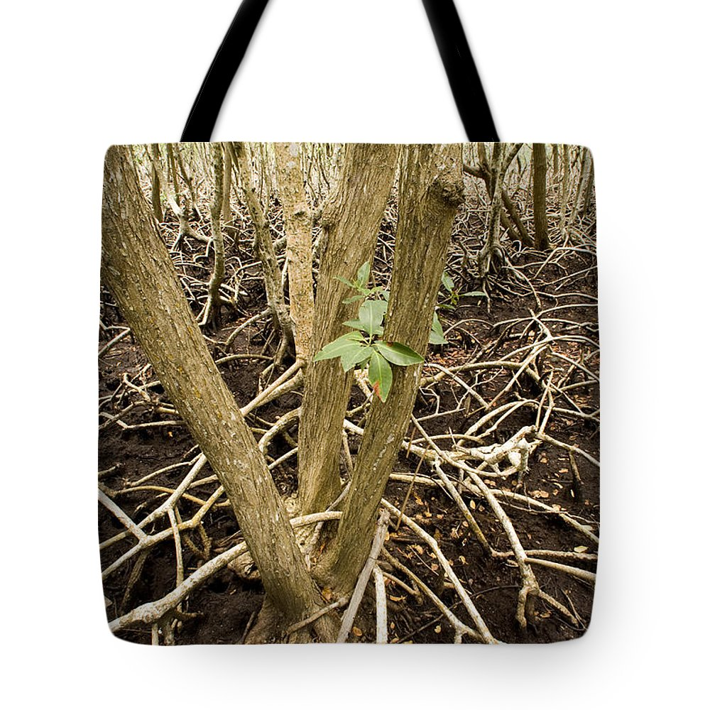 Nobody Tote Bag featuring the photograph Mangrove Forest With Red Mangrove by Tim Laman