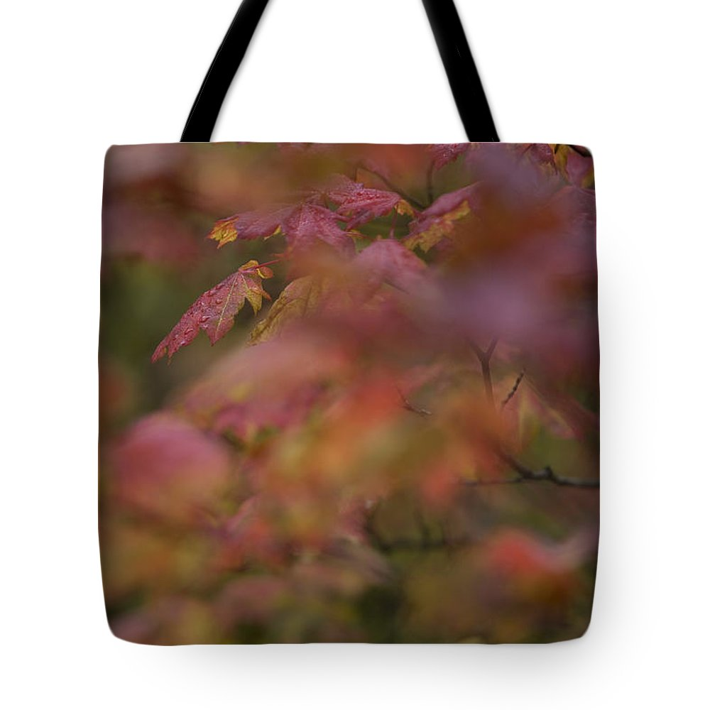 British Columbia Tote Bag featuring the photograph Maple Leaves Are Bright Red On A Rainy by Taylor S. Kennedy