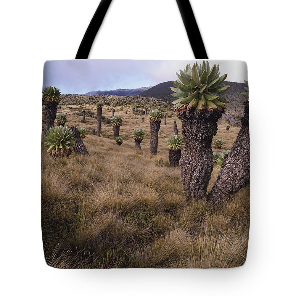 Geography Tote Bag featuring the photograph Meadows And Groundsel Trees, Mt by Skip Brown