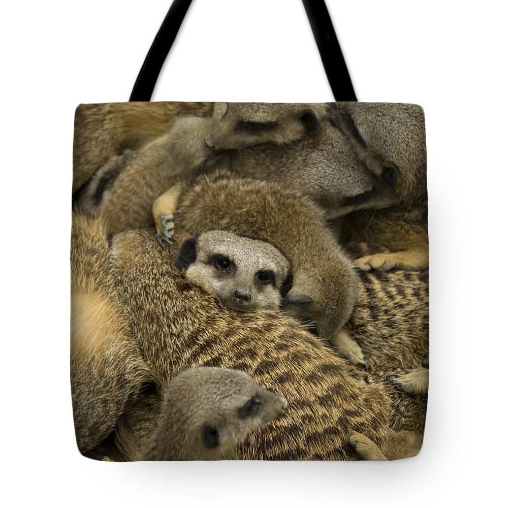 Meerkat Tote Bag featuring the photograph Meerkat Family by Steev Stamford