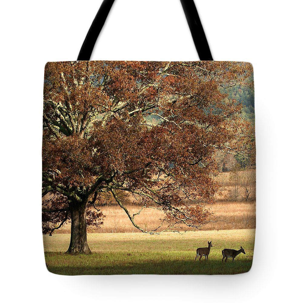 Oak Tote Bag featuring the photograph Mighty Oak by TnBackroadsPhotos
