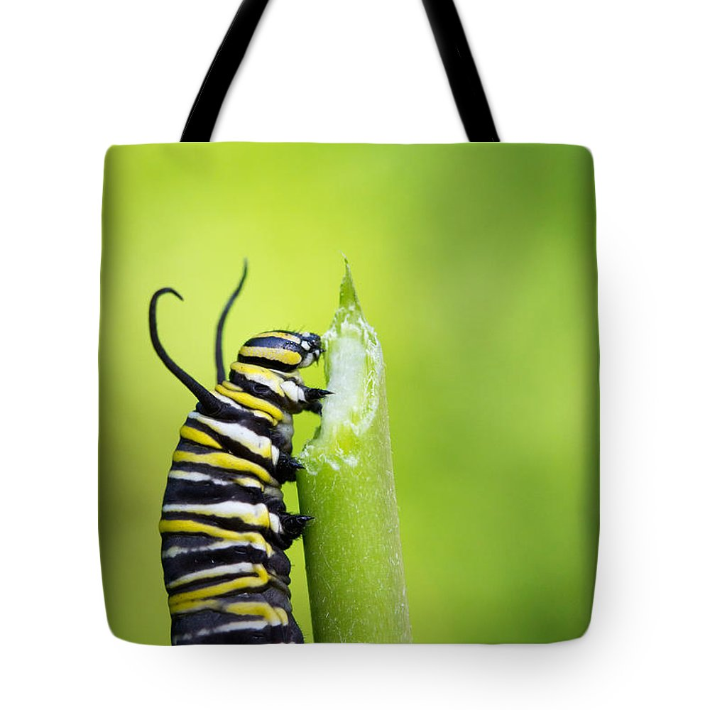 Caterpillar Tote Bag featuring the photograph Monarch Caterpillar by Stephanie McDowell