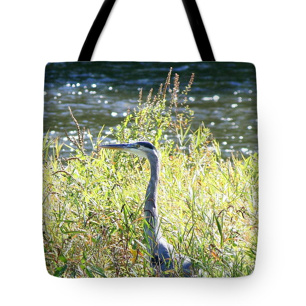 Great Blue Heron Tote Bag featuring the photograph Morning Gaze by Neal Eslinger