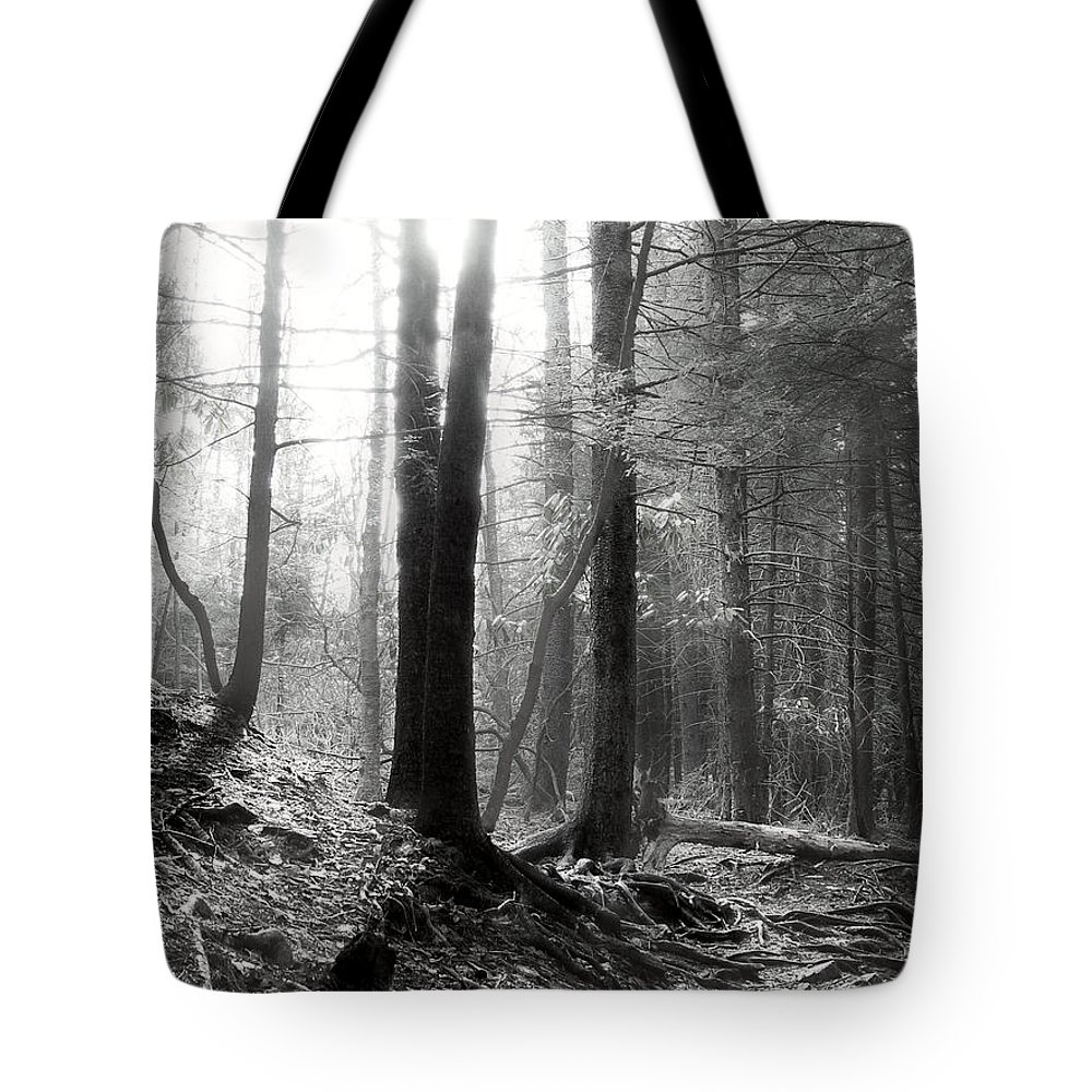 Sunlight Tote Bag featuring the photograph Morning Sun by Mary Almond