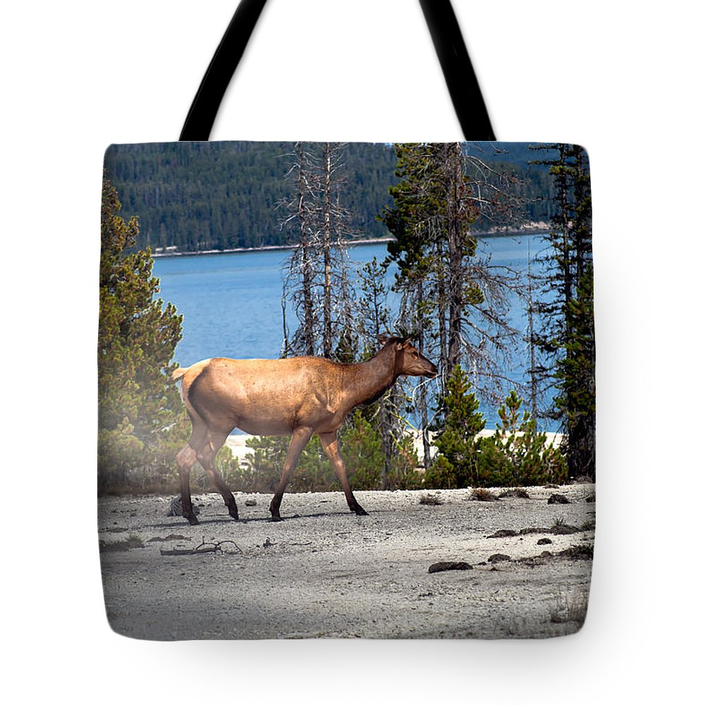 Animals Tote Bag featuring the photograph Morning Walk by Robert Bales