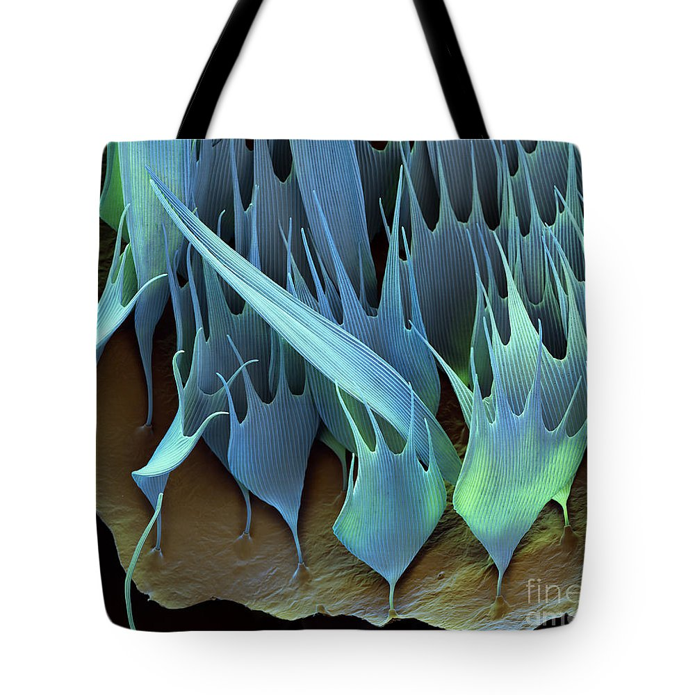 Sem Tote Bag featuring the photograph Moth Wing Scales Sem by Eye of Science