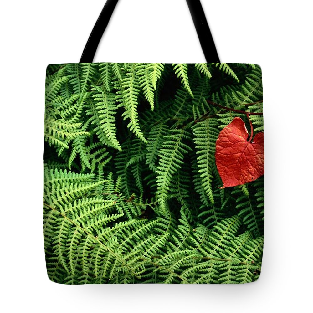 West Virginia Tote Bag featuring the photograph Mountain Bindweed And Fern Fronds by Bates Littlehales