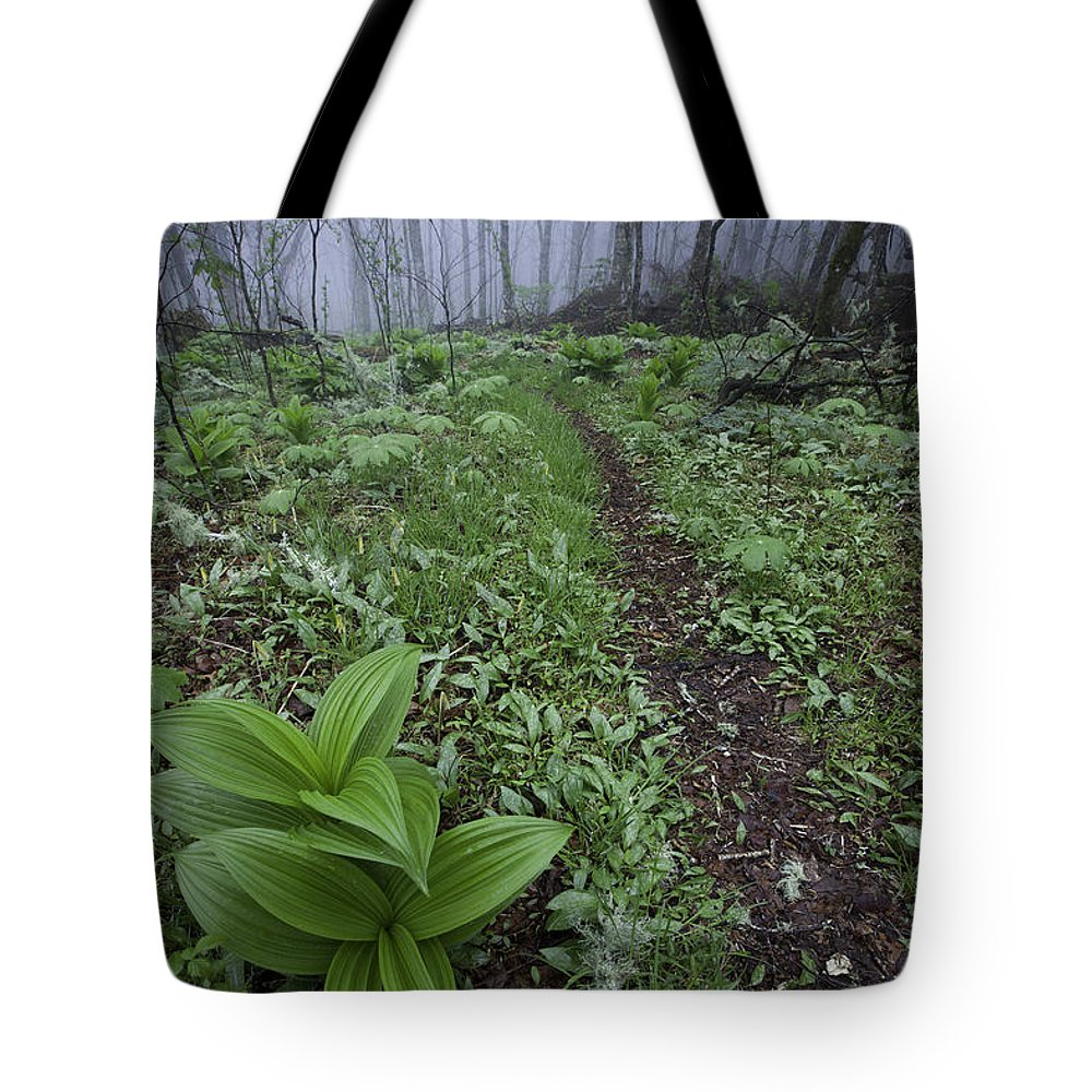 Blue Ridge Parkway Tote Bag featuring the photograph Mountains To Sea Trail by Rob Travis