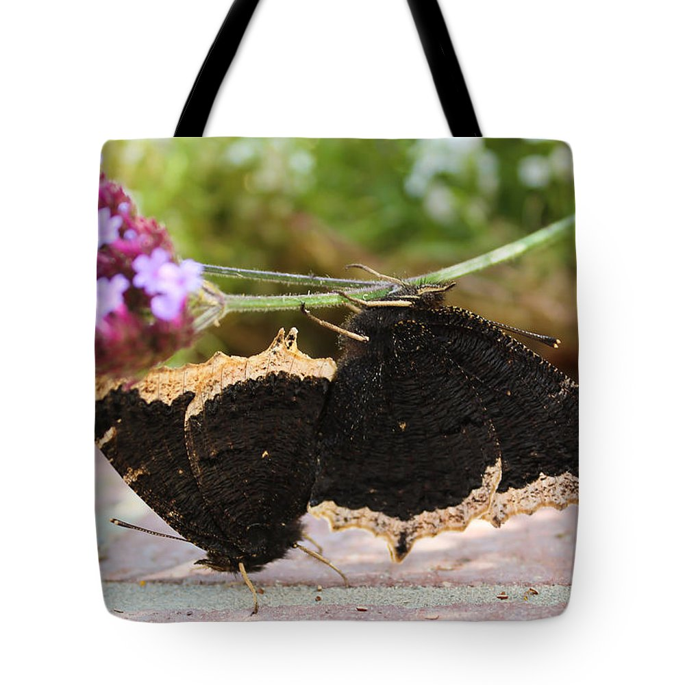 Mourning Cloak Tote Bag featuring the photograph Mourning Cloak Butterfly Lovin' by Heidi Smith