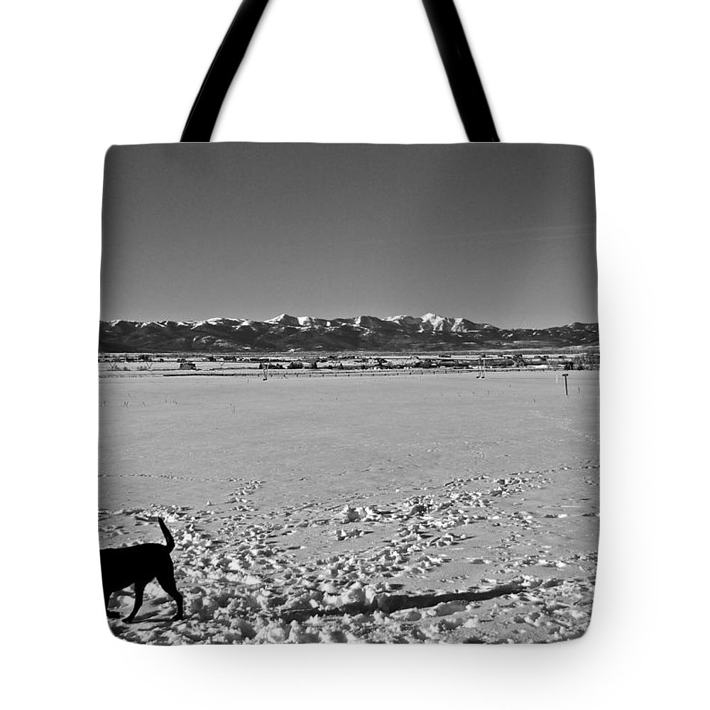 Murphy Tote Bag featuring the photograph Murphy's Territory by Eric Tressler