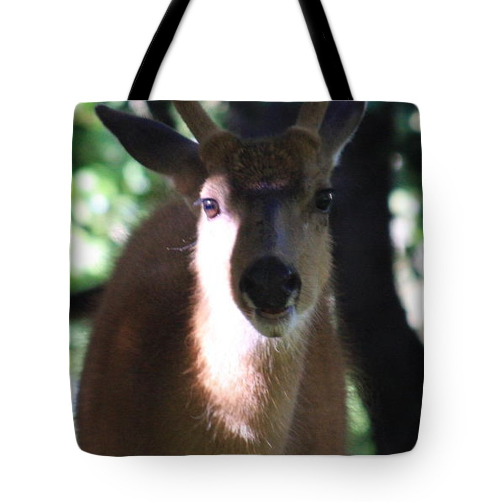 Deer Tote Bag featuring the photograph My Friend by John McManus
