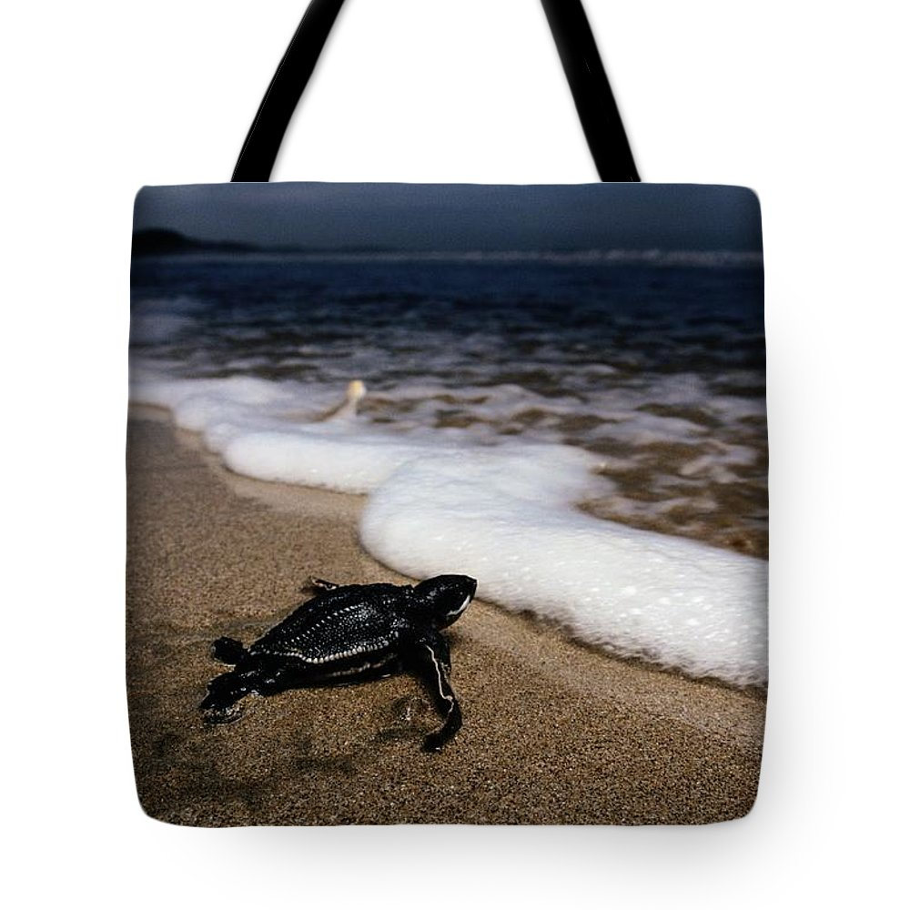 Wild Animals Tote Bag featuring the photograph Newly Hatched Leatherback Turtle by Steve Winter