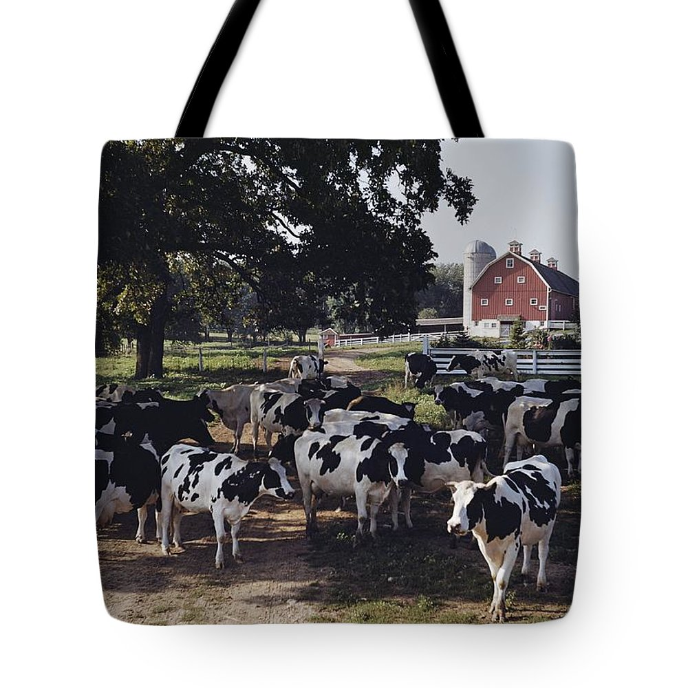 cattle Tote Bag featuring the photograph No Captions by B. Anthony Stewart