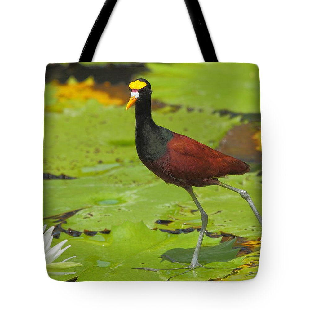 Northern Jacana Tote Bag featuring the photograph Northern Jacana by Andrew McInnes