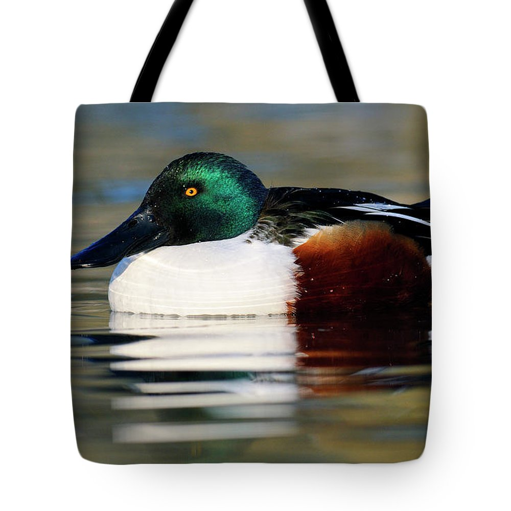 Mp Tote Bag featuring the photograph Northern Shoveler Anas Clypeata Male by Jasper Doest