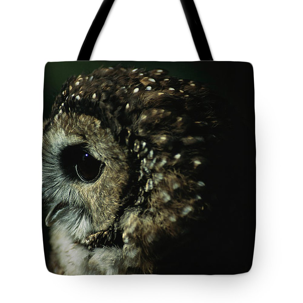 Animals Tote Bag featuring the photograph Northern Spotted Owl Strix Occidentalis by Joel Sartore