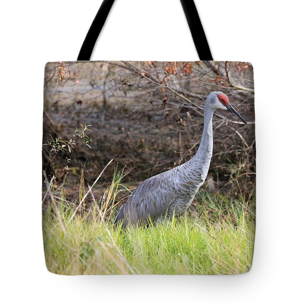 Sandhill Crane Tote Bag featuring the photograph November Sandhill Crane by Carol Groenen