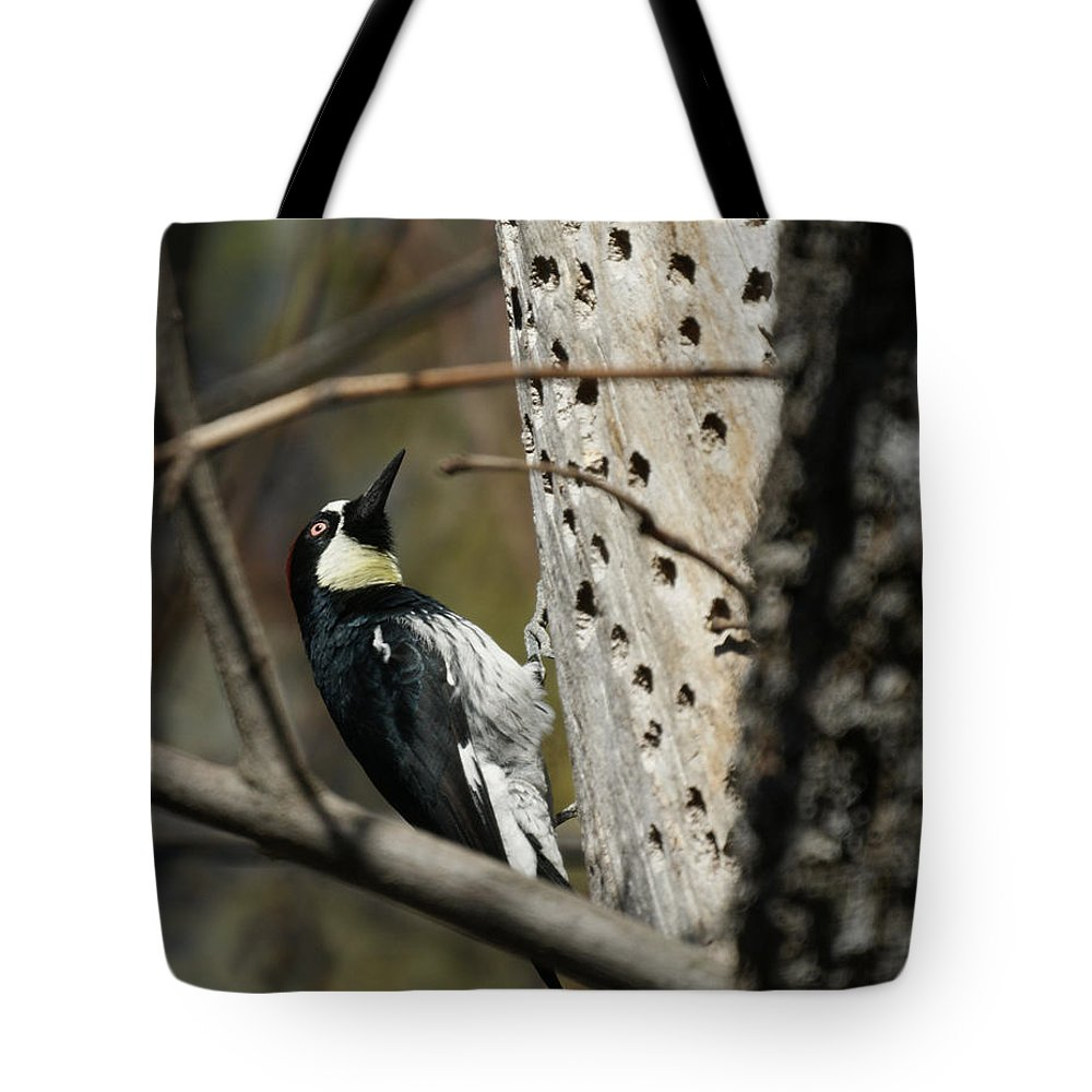 Now Where Did I Put It Tote Bag featuring the photograph Now Where Did I Put It by Ernie Echols