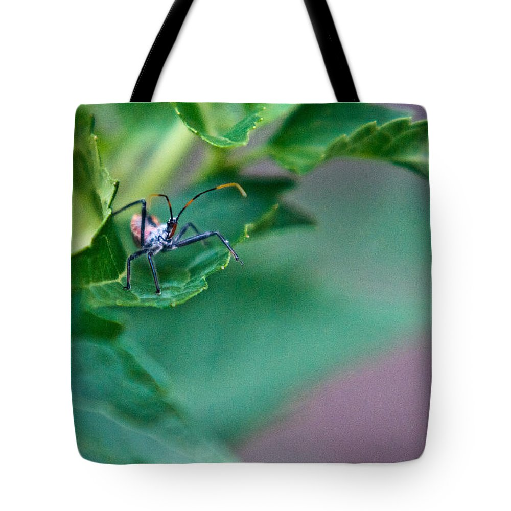 Nymphal Tote Bag featuring the photograph Nymphal Himipterian 2 by Douglas Barnett