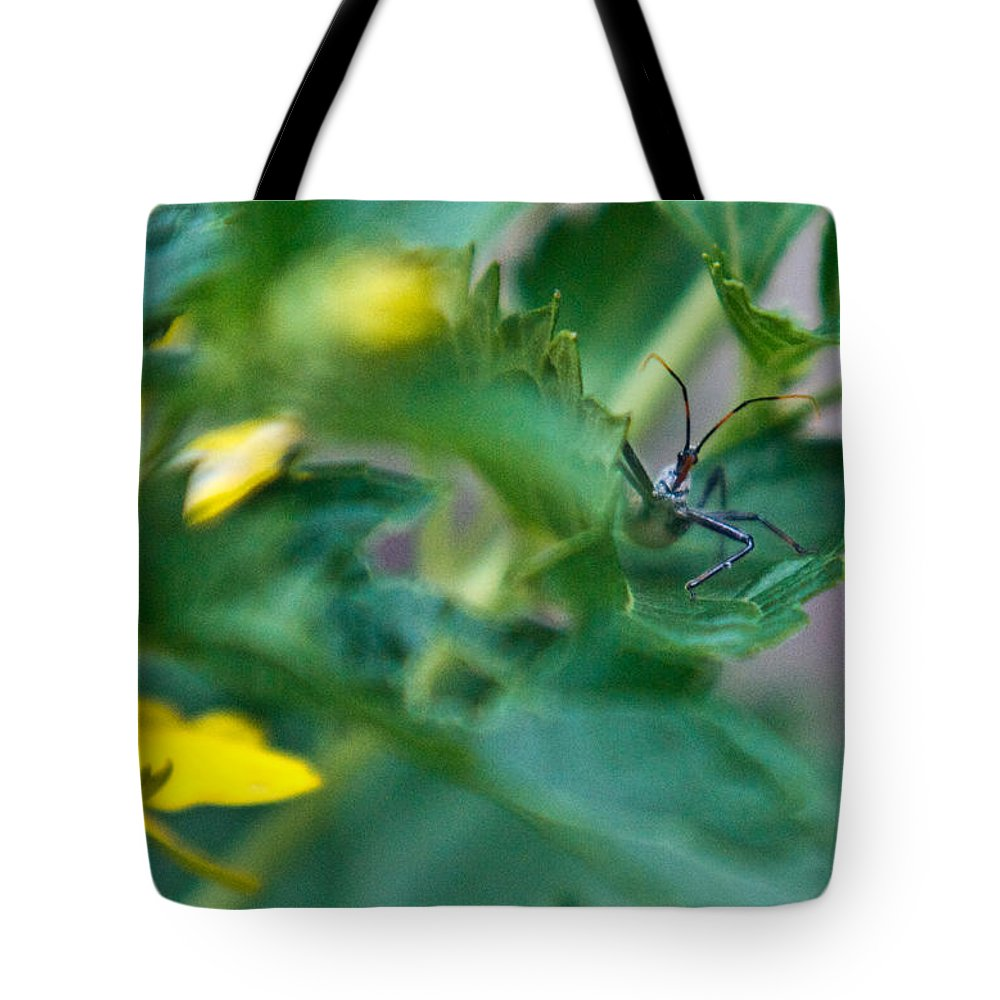Nymphal Tote Bag featuring the photograph Nymphal Himipterian 3 by Douglas Barnett