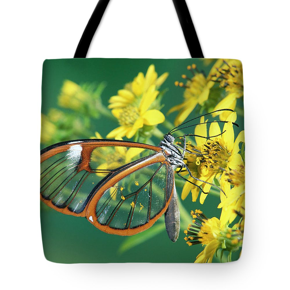 Mp Tote Bag featuring the photograph Nymphalid Butterfly Pteronymia Sp by Michael & Patricia Fogden