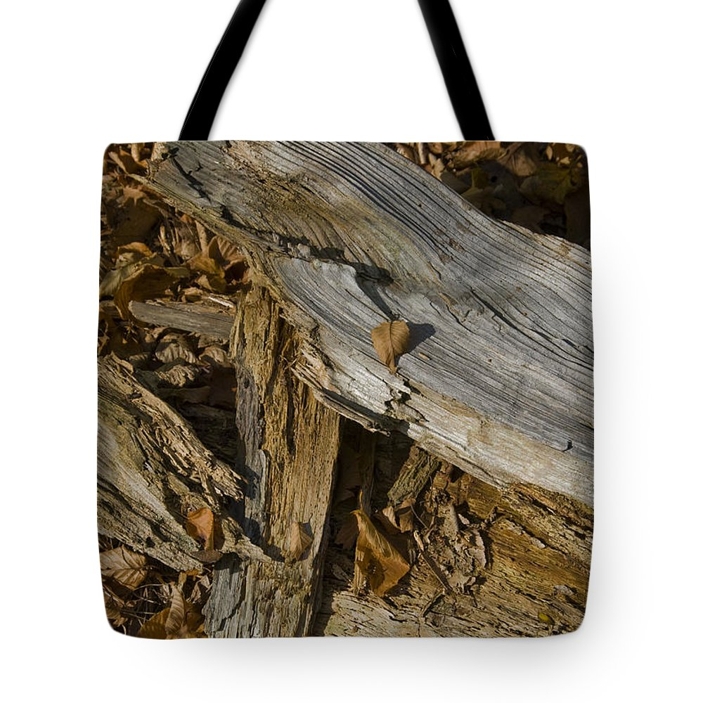 Woods Tote Bag featuring the photograph Old Tree Trunks And Leaves Decaying by Todd Gipstein