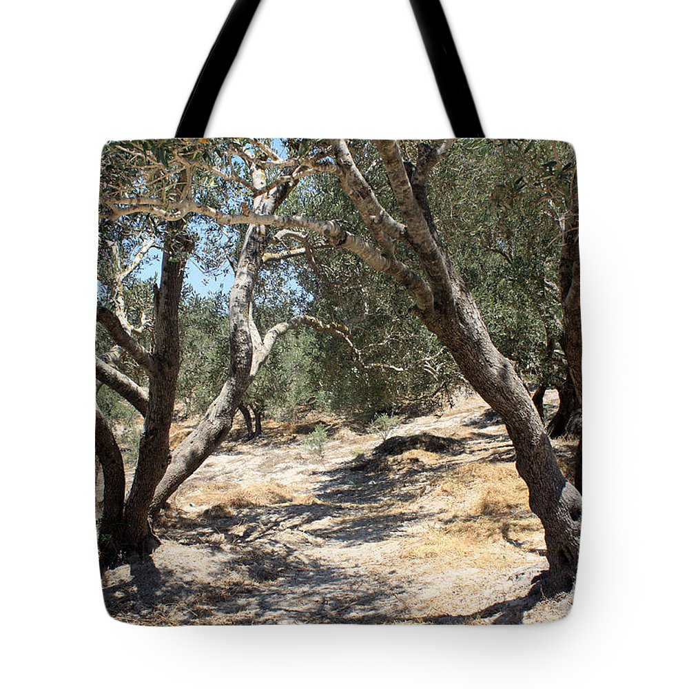 Olive Tote Bag featuring the photograph Olive Trees At Sebastia by Munir Alawi