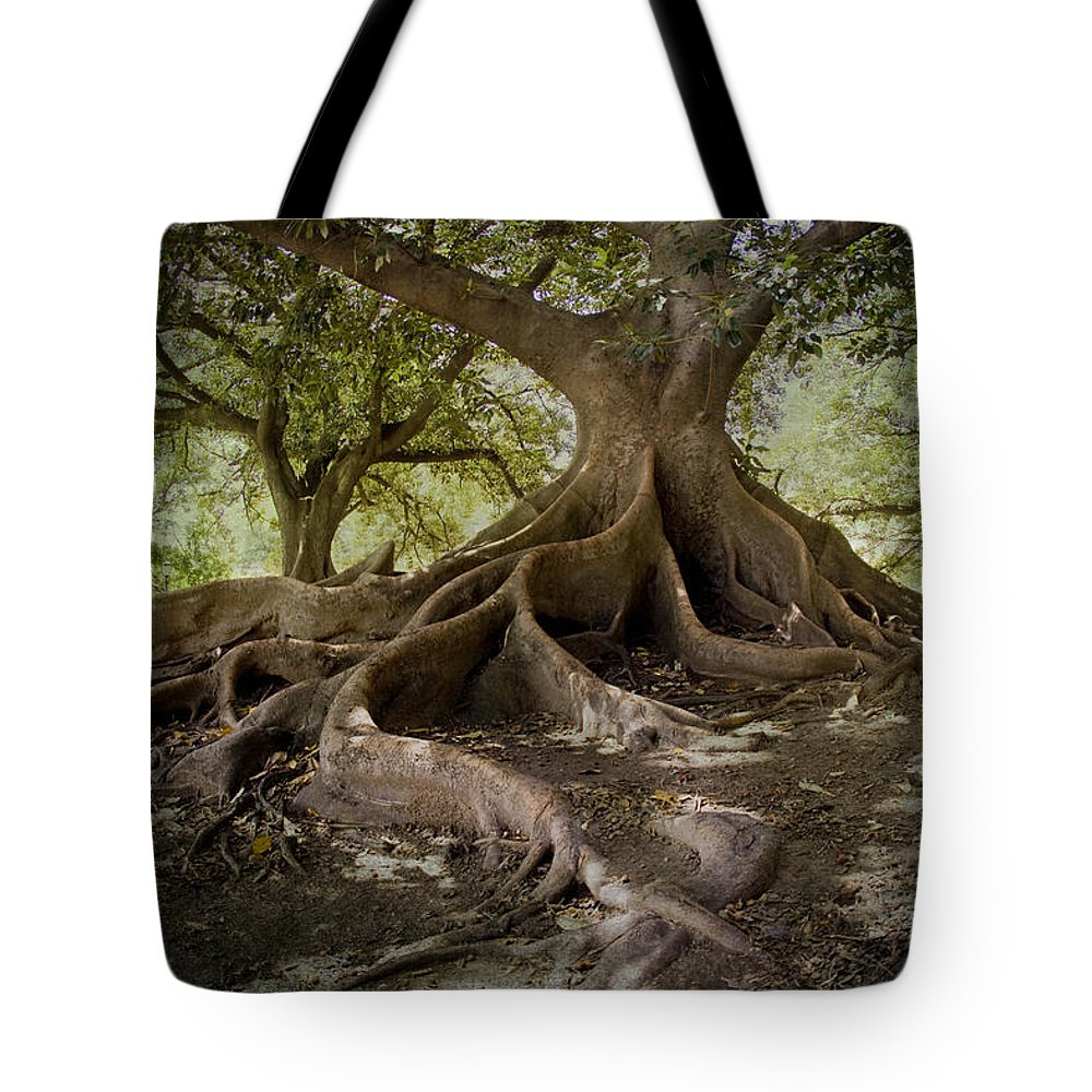 Tree Tote Bag featuring the digital art Ombu In Buenos Aires by Diane Dugas