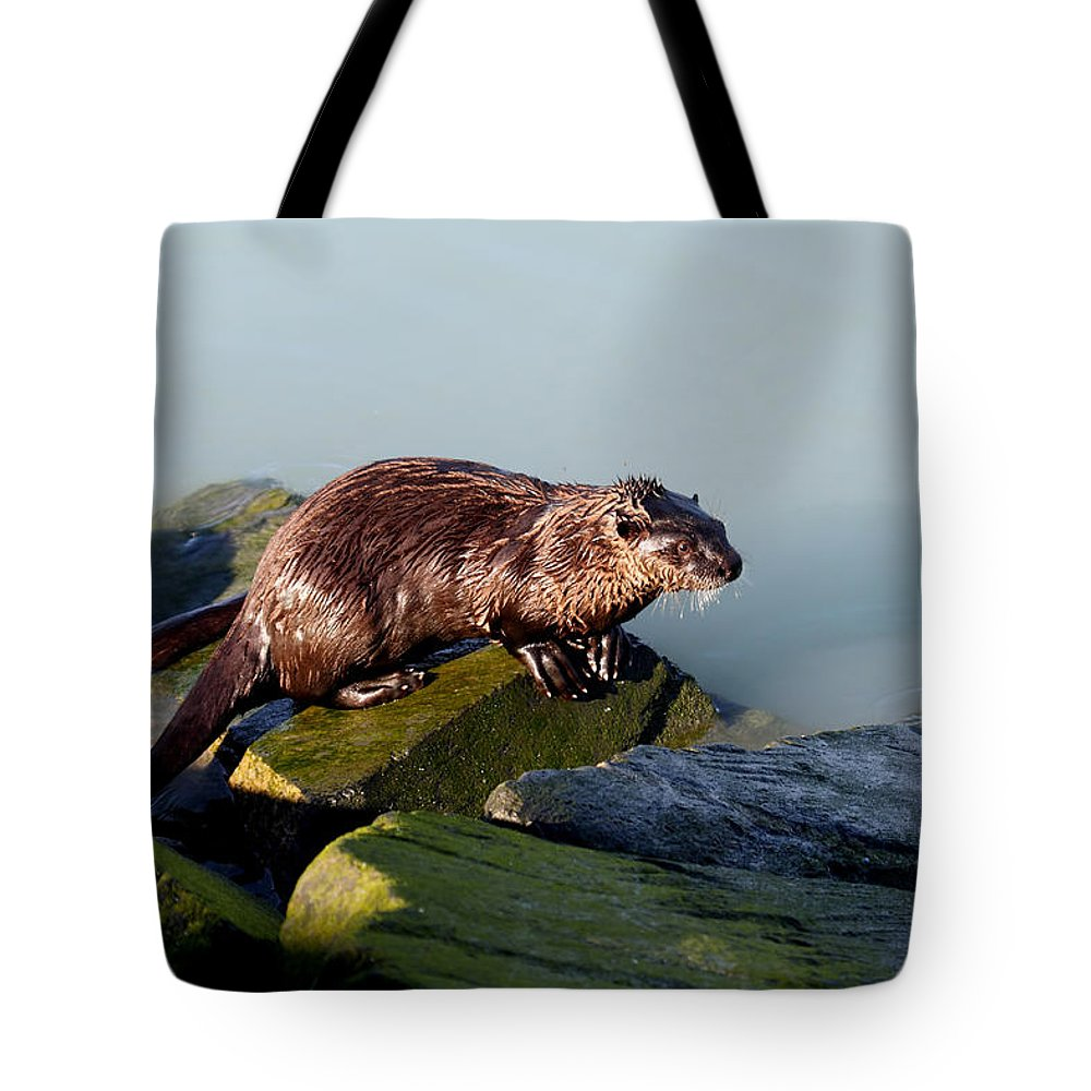 Doug Lloyd Tote Bag featuring the photograph On The Rocks by Doug Lloyd
