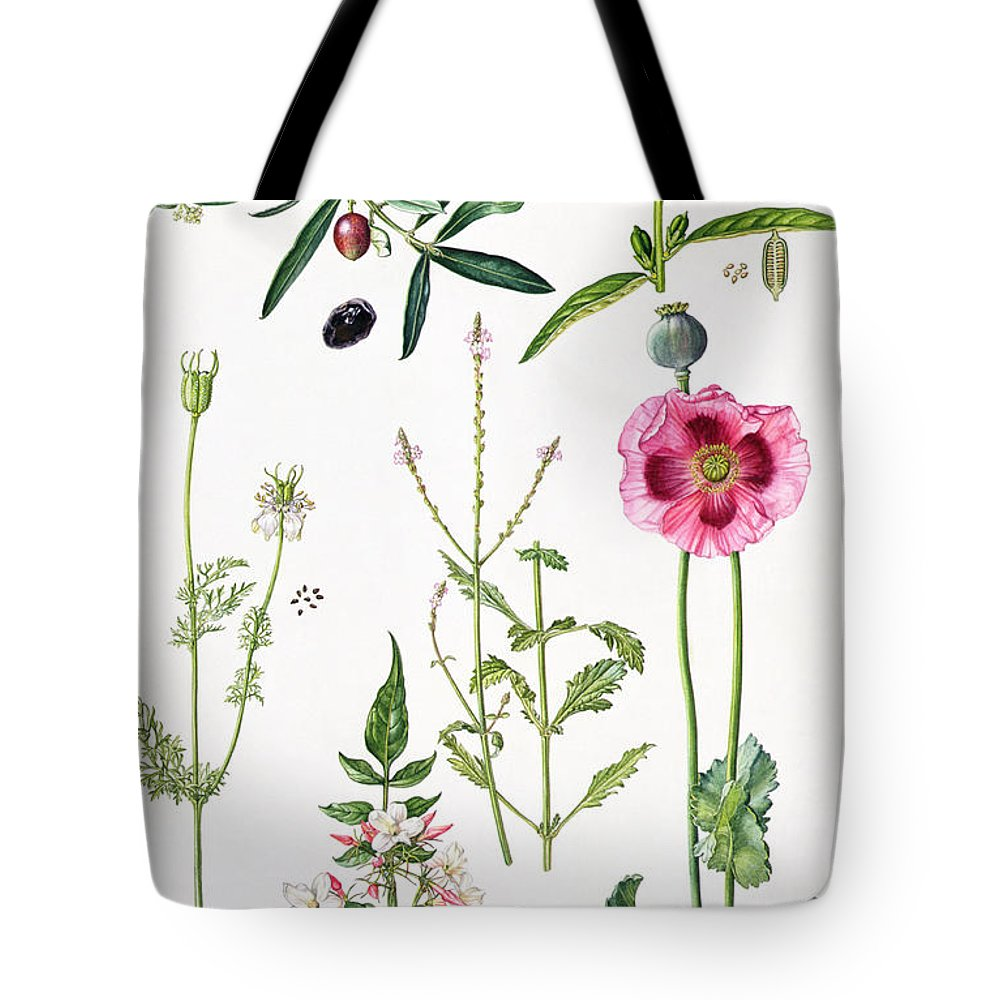 Sesame; Black; Cumin; Olive; Vervain; White; Jasmine; Herb; Botanical; Herbs; Opium Poppy; Olives; Leaf; Leafs; Flower; Flowering Tote Bag featuring the painting Opium Poppy And Other Plants by Elizabeth Rice