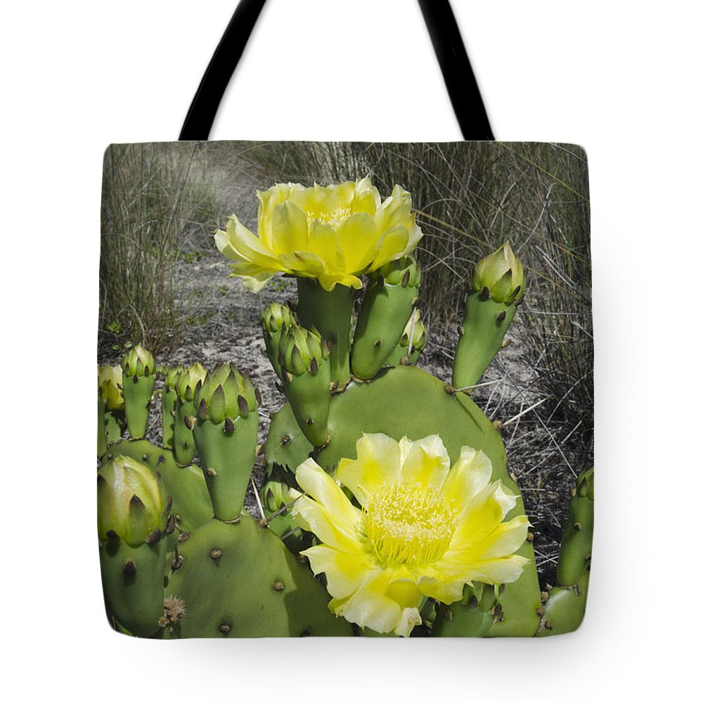 Mp Tote Bag featuring the photograph Opuntia Opuntia Sp Cactus Flowering by Pete Oxford